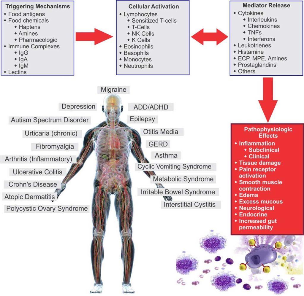 How-Food-Sensitivities-Cause-Inflammation-Chart